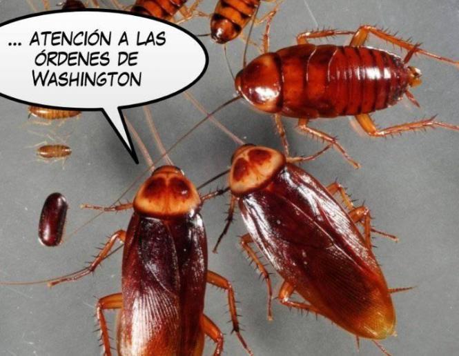 la_voz_del_amo2.jpg