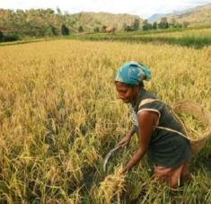 """El director general de la FAO, QU Dongyu, afirmó que las mujeres rurales son """"agentes activos del cambio económico y social"""". Foto: UN Woman"""