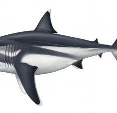 Hasta ahora su longitud había sido estimada solo a partir de fósiles de sus dientes. Reconstruction by Oliver E. Demuth / bristol.ac.uk